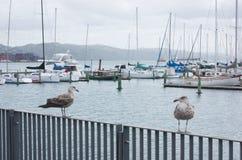 Wellington Waterfront Stock Photos