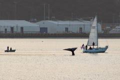 Wellington Whale Watchers, Nieuw Zeeland royalty-vrije stock foto's