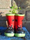 Wellingtons flower pot Stock Images