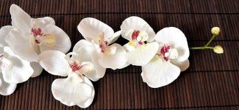 Wellneßorchideen Stockfotos