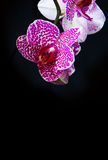 Wellnes card and pink orchid. Stock Image