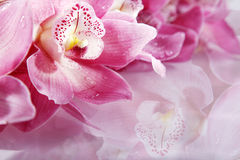Wellnes close shot with pink flowers Royalty Free Stock Photos