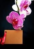 Wellnes karciana i różowa orchidea Obrazy Royalty Free