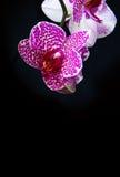 Wellnes karciana i różowa orchidea Obraz Stock