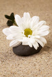 Wellness. Stones with flower on sand royalty free stock images