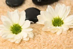 Wellness Stock Images