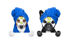Wellness beauty mask row of dogs Stock Images