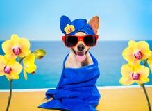 Wellness beauty   spa  dog Stock Photo