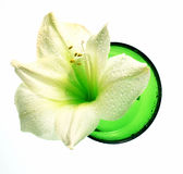 Wellness decoration - amaryllis in green bowl Stock Image