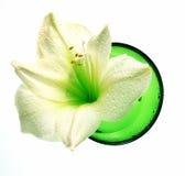 Wellness decoration - amaryllis in green bowl Stock Image