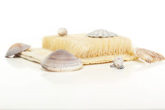 Wellness decoration with brush and seashells Stock Images