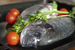 Wellness and diet. Fresh fish Stock Photos