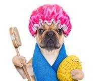 Free Wellness Dog Stock Images - 48516434