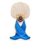 Wellness dog Royalty Free Stock Photography