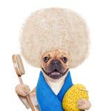 Wellness dog Stock Photos