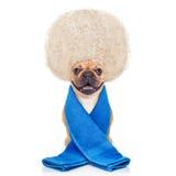 Wellness dog Royalty Free Stock Image