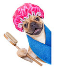 Wellness dog royalty free stock photography