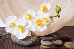 Wellness entsteint Orchideen Lizenzfreie Stockbilder
