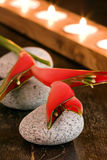 Wellness Holiday. Red heliconia on stones with candle light in background Royalty Free Stock Photo