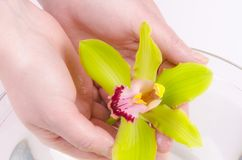 Wellness para as mãos Imagens de Stock Royalty Free