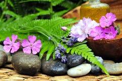Wellness pflanzt Stein Stockfoto