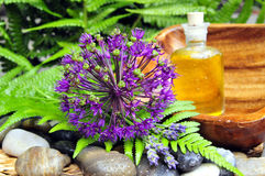 Wellness plant groene olie stock foto's