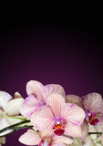 Wellness and Spa stock images