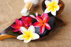 Wellness spa & aromatherapy concept. Wellness spa & aromatherapy concept with frangipani flower on jute fabric Stock Images