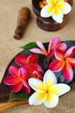 Wellness spa & aromatherapy concept. Wellness spa & aromatherapy concept with frangipani flower on jute fabric Stock Photos