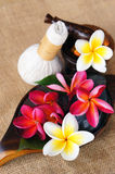 Wellness spa & aromatherapy. Wellness spa & aromatherapy concept with frangipani flower on jute fabric Royalty Free Stock Photos