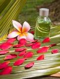 Wellness spa dat op kokosnotenblad plaatst Stock Afbeeldingen