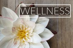 Wellness Spa sign royalty free stock images