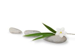 Wellness still life, blades of bamboo and jasmine stock images