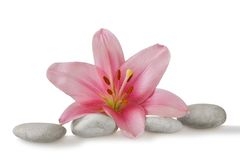 Wellness still life pebbles and pink lily stock images