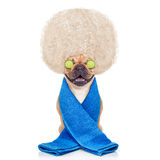 Wellnesshund lizenzfreie stockfotografie
