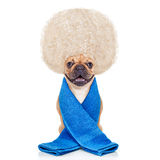 Wellnesshund Lizenzfreies Stockbild