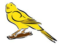 Wellow canary. Drawing of a wellow canary Royalty Free Stock Photos
