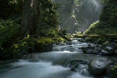 Wells Creek. Beams of light trickle through the canopy along Wells Creek, Snoqualmie National Forest, Washington State, USA Stock Photo