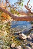 Ветвь старого дерева над The Creek Стоковое Изображение RF