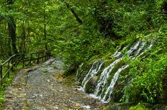 Wellspring and cascade at Tara mountain and national park Royalty Free Stock Photo