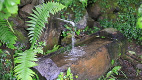Wellspring in the forest Royalty Free Stock Photos