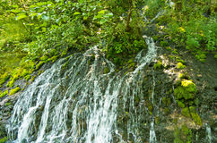 Wellspring with small cascades at Tara mountain and national park Stock Image