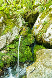 Wellspring at Tara mountain and national park Stock Photo