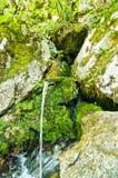 Wellspring at Tara mountain and national park Stock Photo