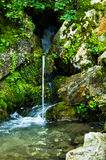 Wellspring at Tara mountain and national park Stock Images