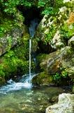 Wellspring at Tara mountain and national park Stock Images