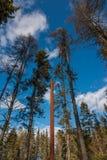 Wellstone pomnik - słup obrazował punkty punkt dokąd samolot rozbijał blisko Eveleth, Minnestoa gdy Paul Wellstone był zdjęcie stock