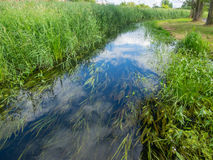 Welna river. In wagrowiec near intersection with Nielba river Stock Photos
