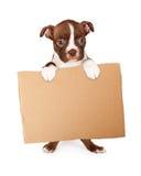 Welpe Bostons Terrier, der leeres Pappzeichen hält Stockfotografie
