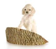 Welpe, der auf Block des Holzes steigt Stockfotos